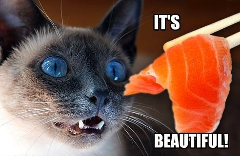 funny pictures cat likes salmon 7 Anti Stress Foods To Blast Stomach Fat Away