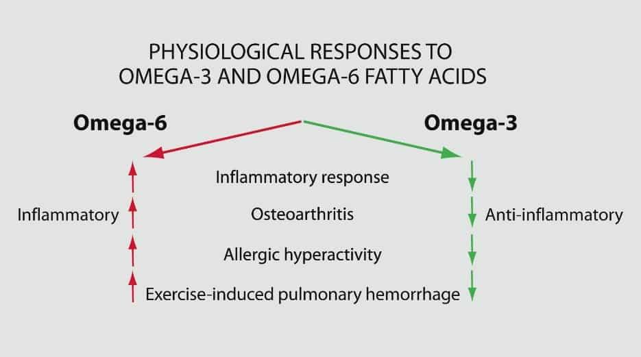 omega3 vs omega6