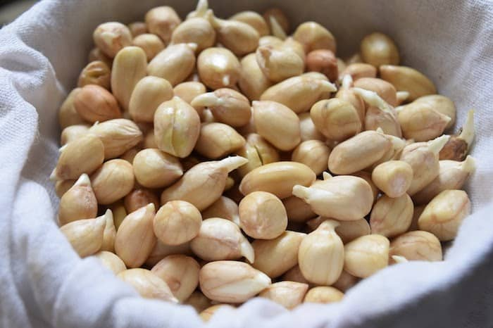 sprouted peanuts