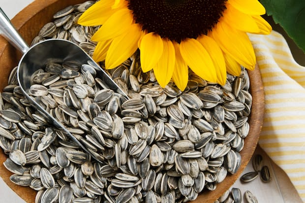 sunflower seeds superfood