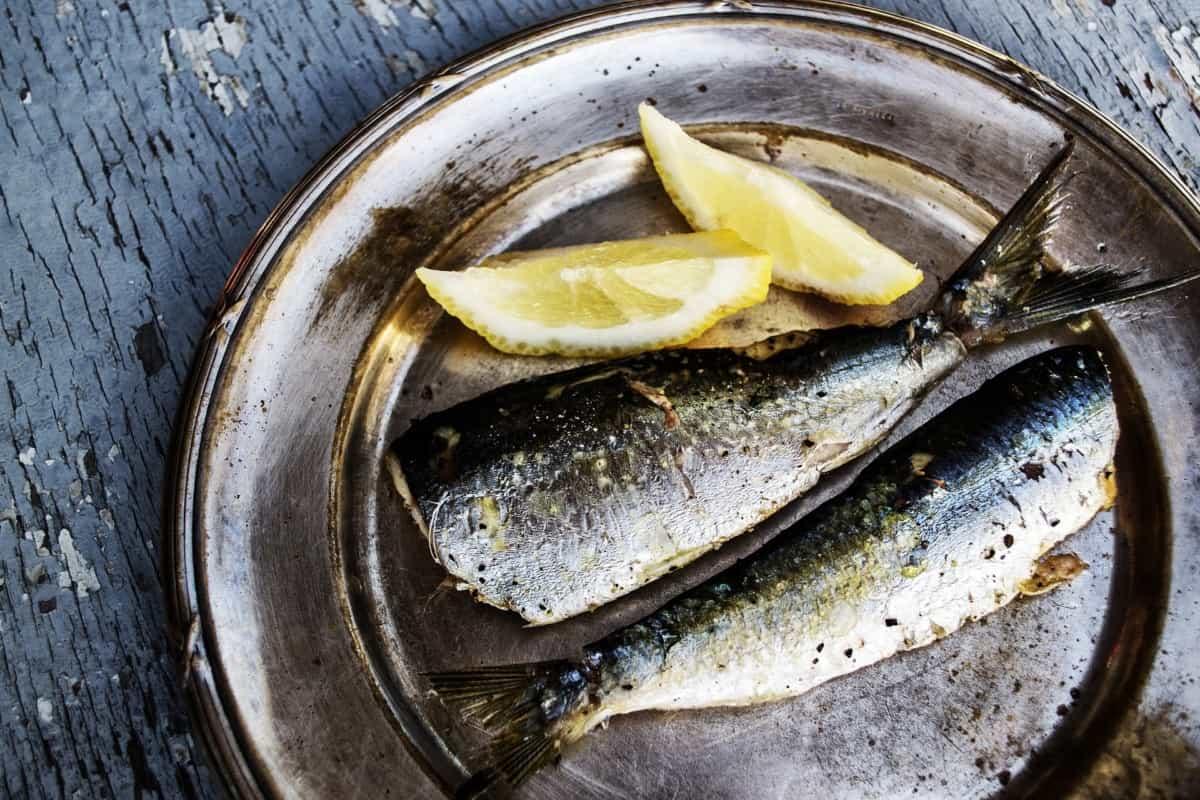 sardine diet