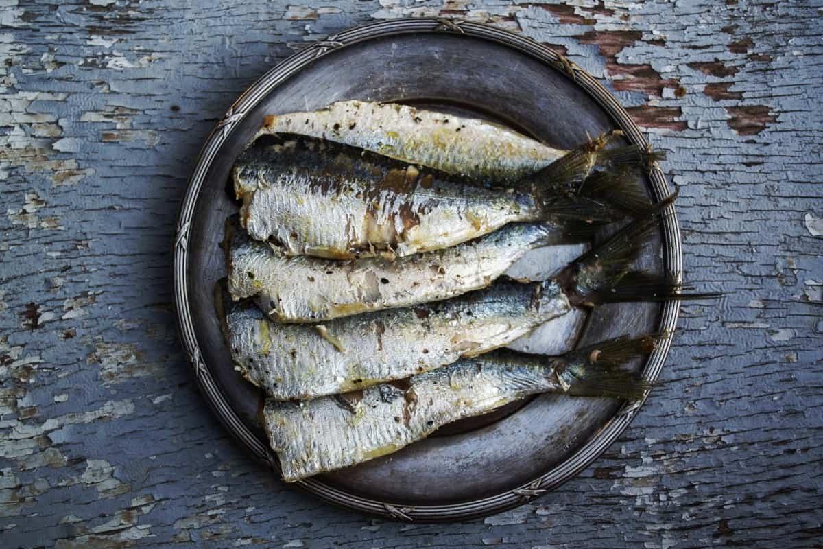 sardine nutrition