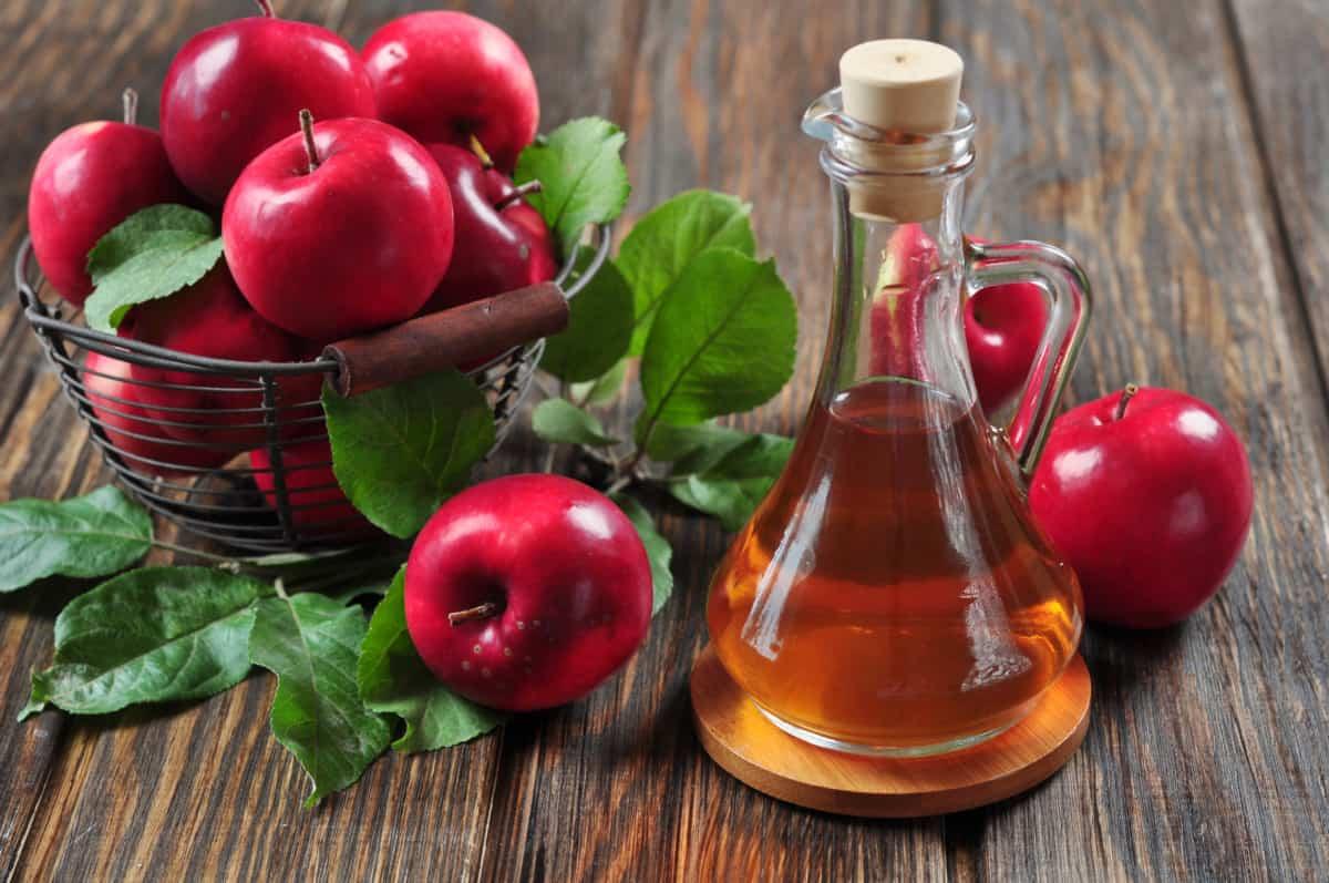 apple cider vinegar gut health