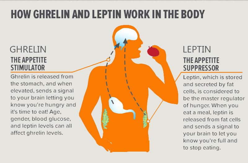 leptin ghrelin weight loss hormones sleep
