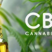 #1 Best CBD Oil 2021 (For Stress, Sleep, Anxiety & Pain)