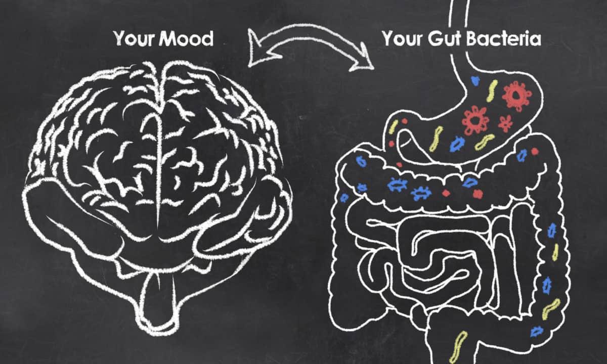 probiotics mood stress anxiety