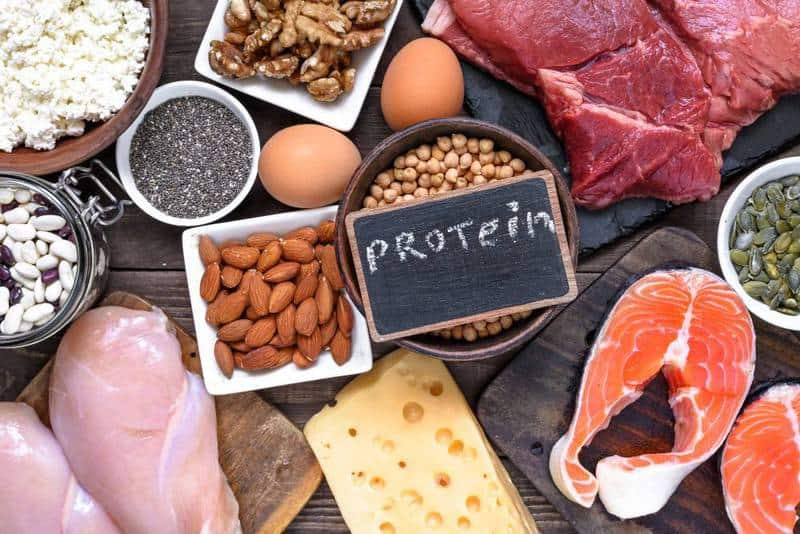 high protein diet weight loss