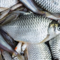 Why Tilapia Is Bad for You (But You Can Still Eat It)