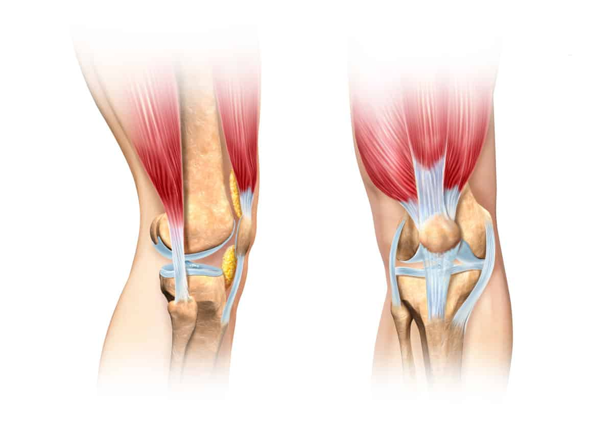 picture of knee fat